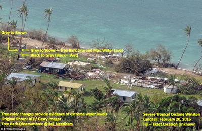 tree damage from tropical cyclone winston