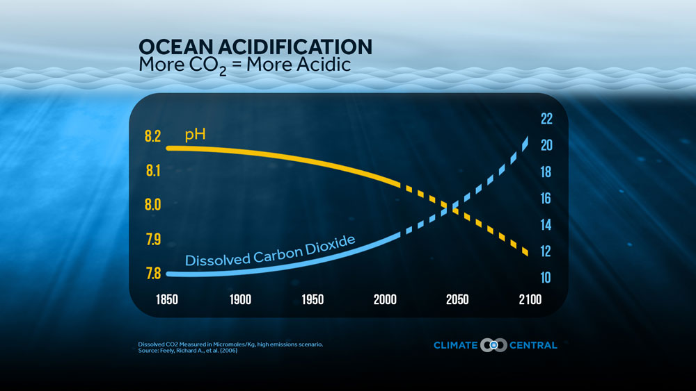 More CO2 means More Acidity