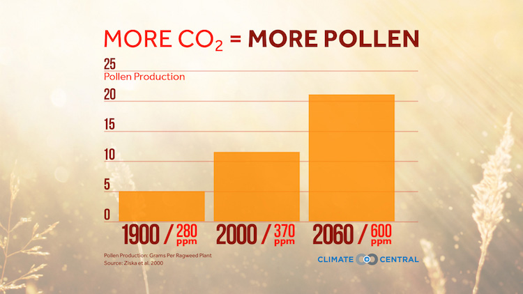 More CO2 Means More Pollen