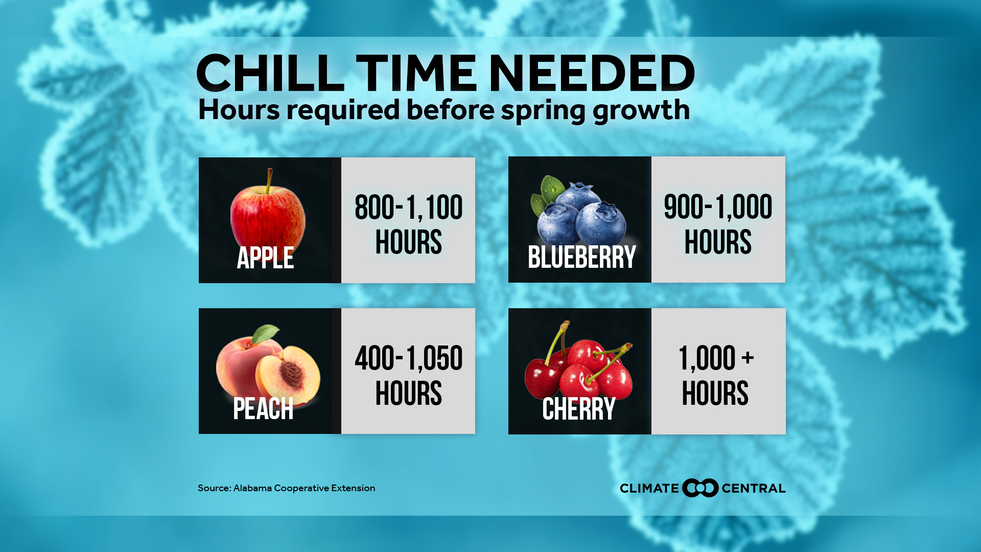 chill time for fruits