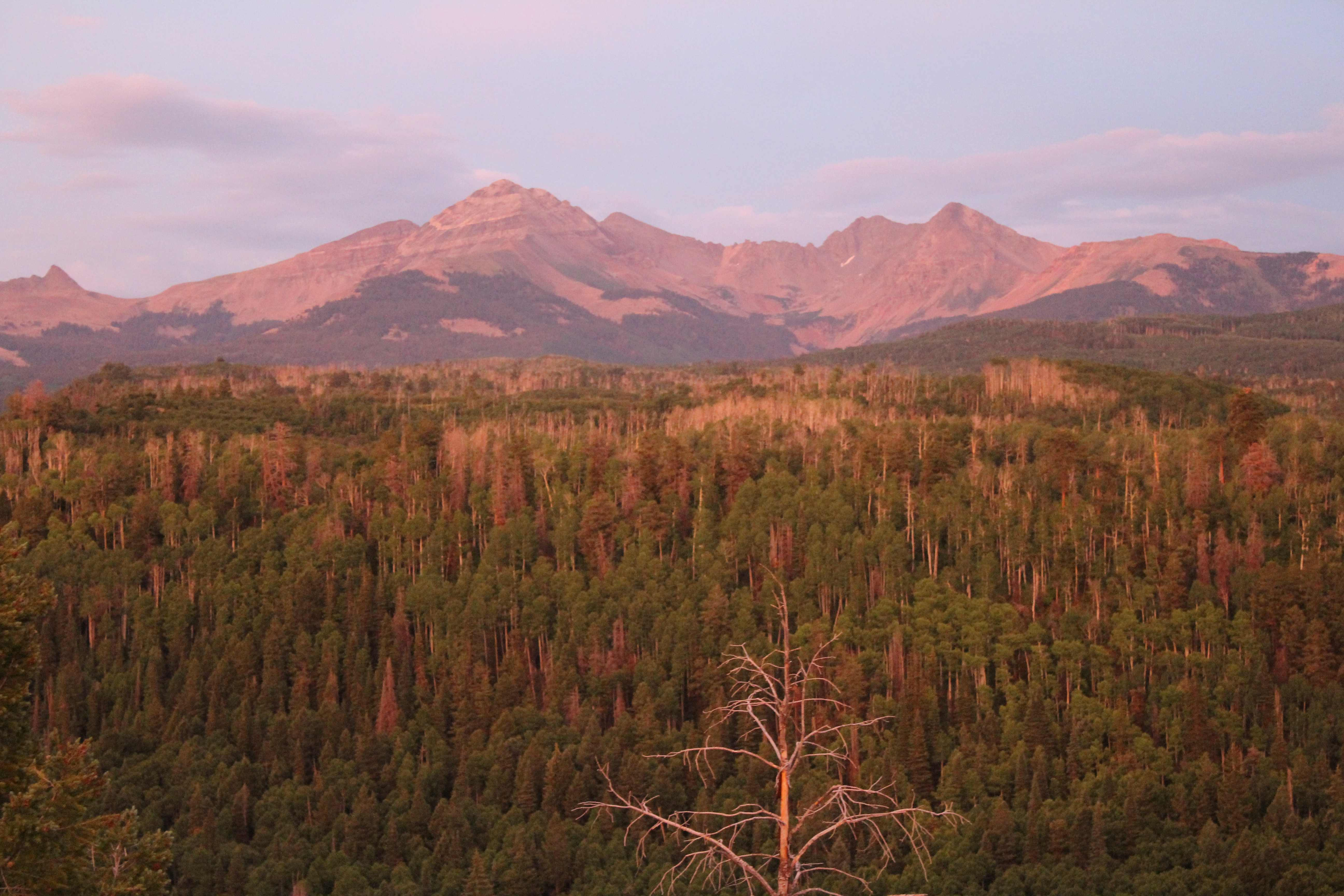 Colorado forests are still recovering from drought.