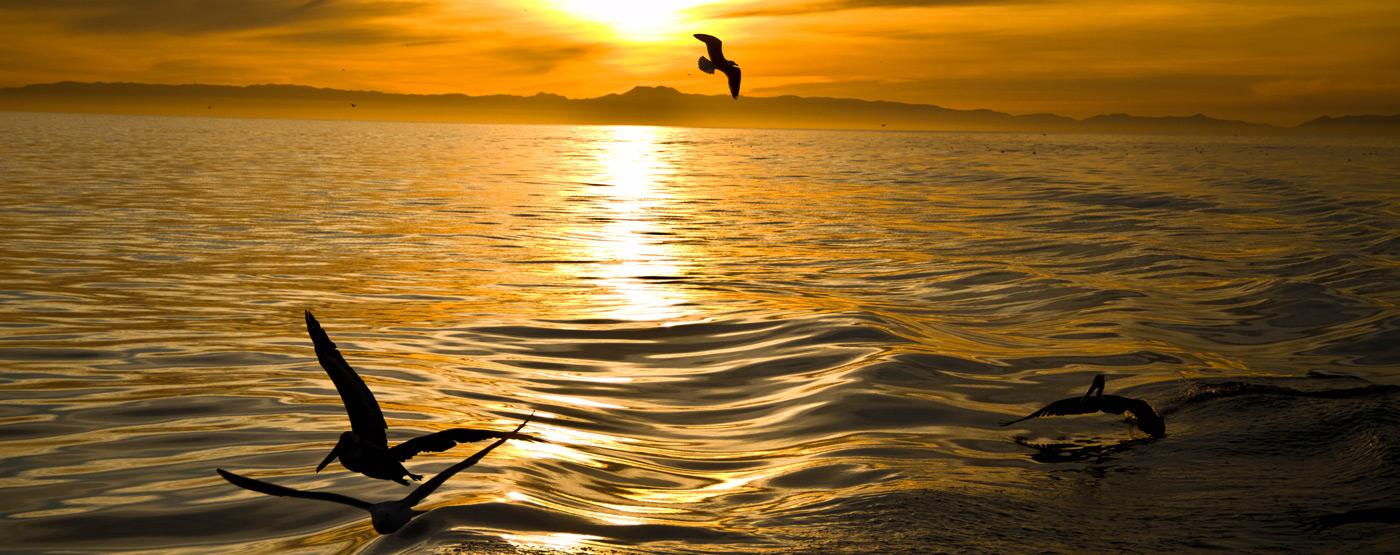Pacific Ocean Pattern Could Predict U.S. Heat Waves