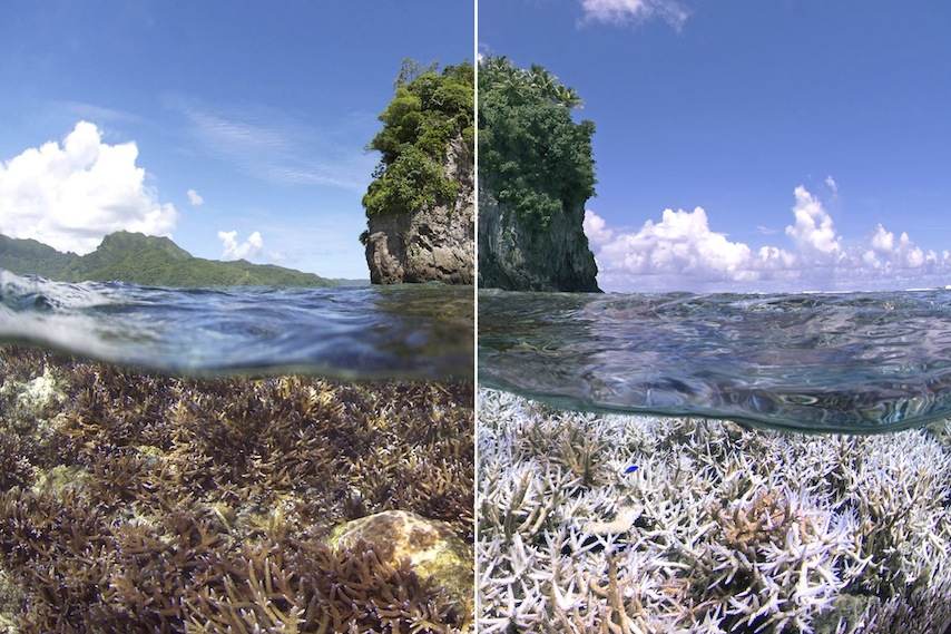 A before and after image of the bleaching in American Samoa