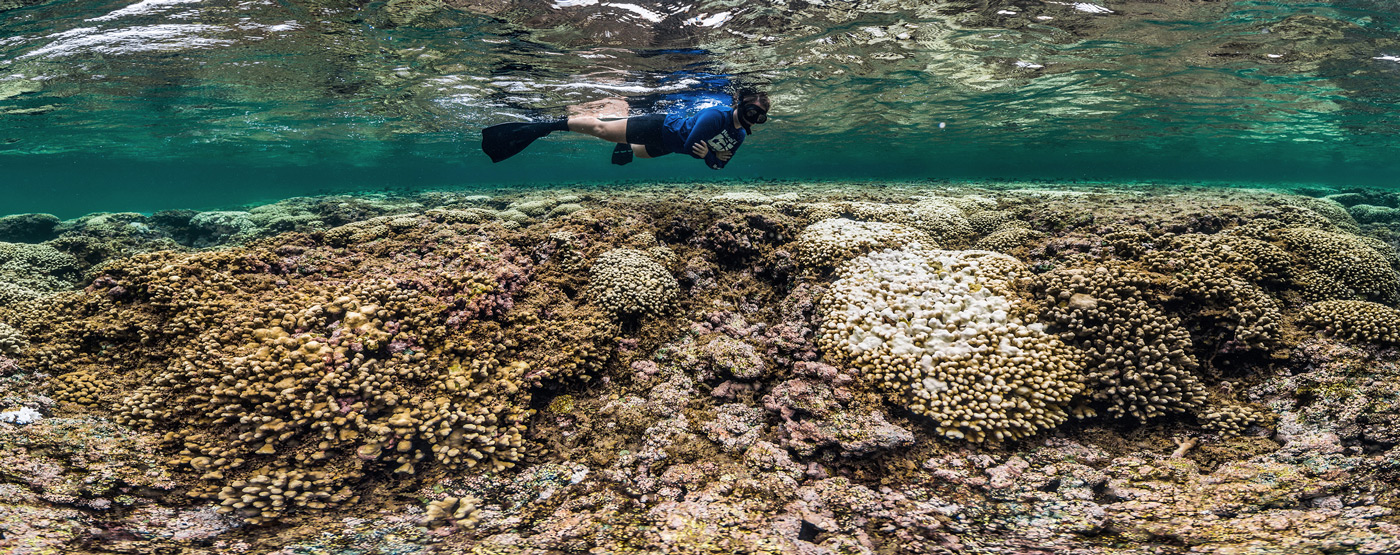 Hot Oceans Are Killing Coral Reefs Around the World