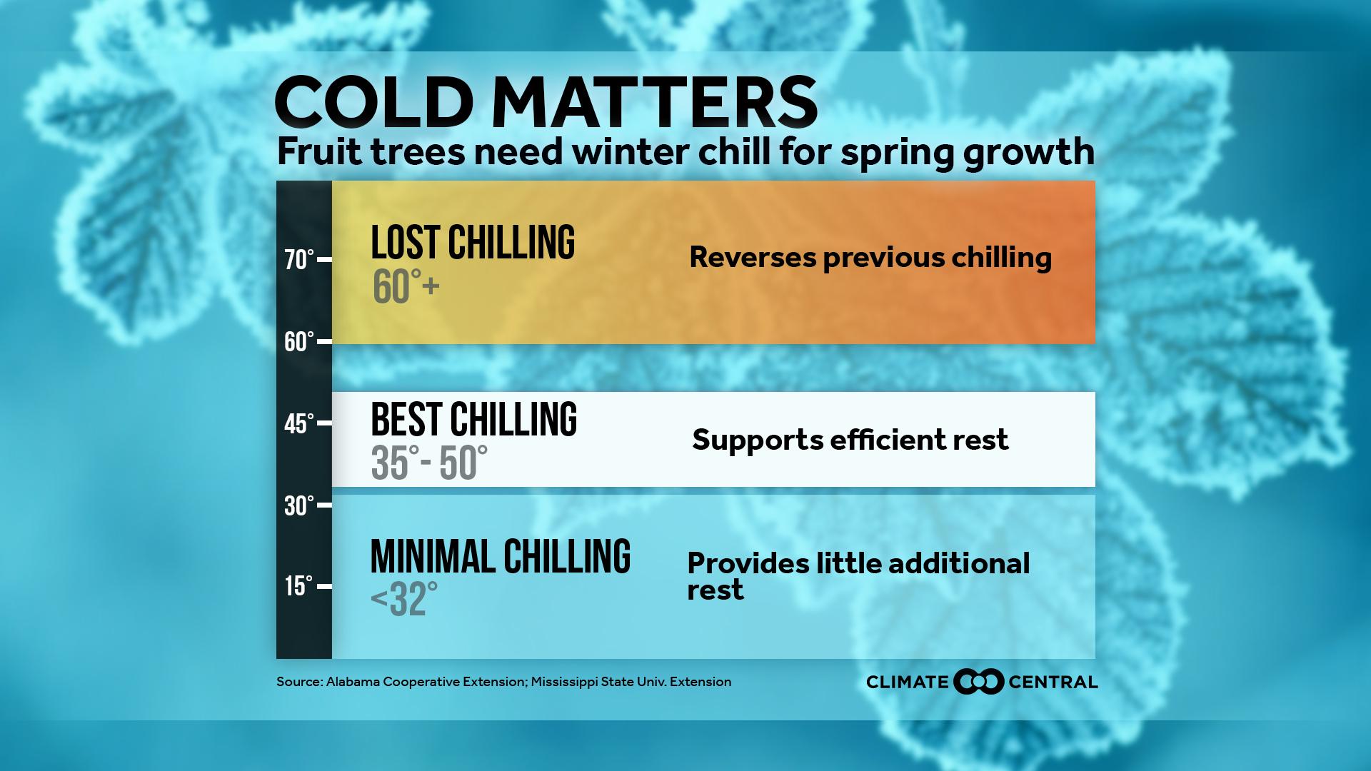 mild winters disturb chill time