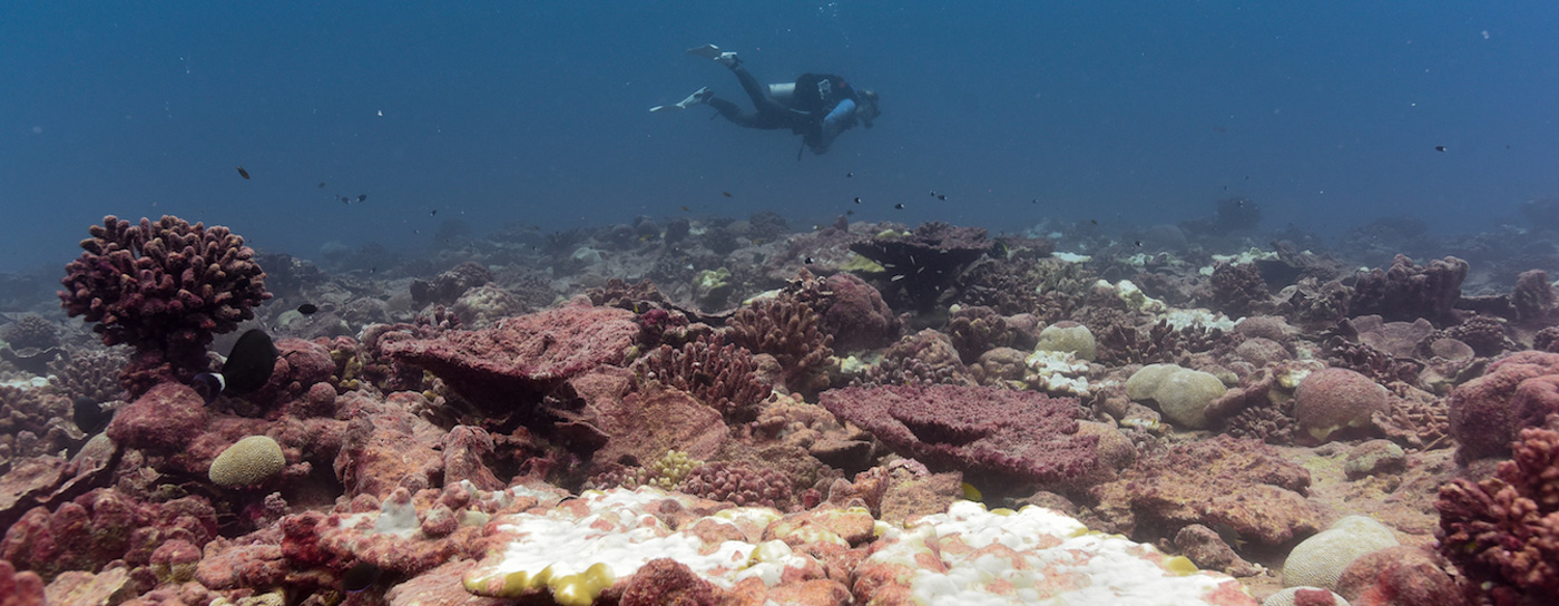 There's a Hopeful Message Hidden in These Dead Reefs