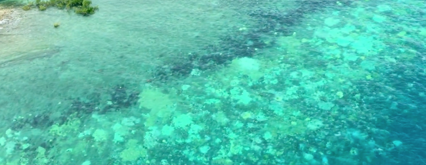 Coral Bleaching Has Hit 93 Percent of the Great Barrier Reef