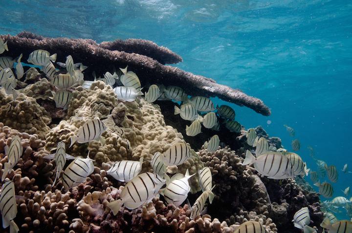 A coral reef at Shark Island