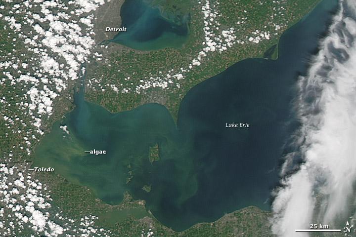 Lake Erie algae bloom captured by satellite August 2014.